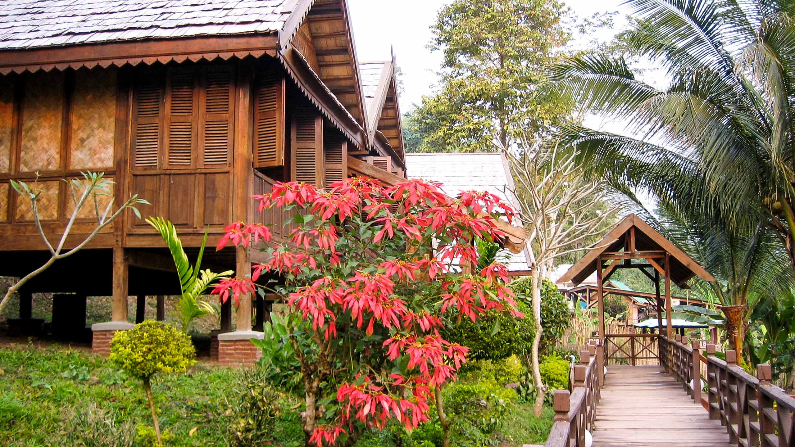Flowers outside Laos cabins