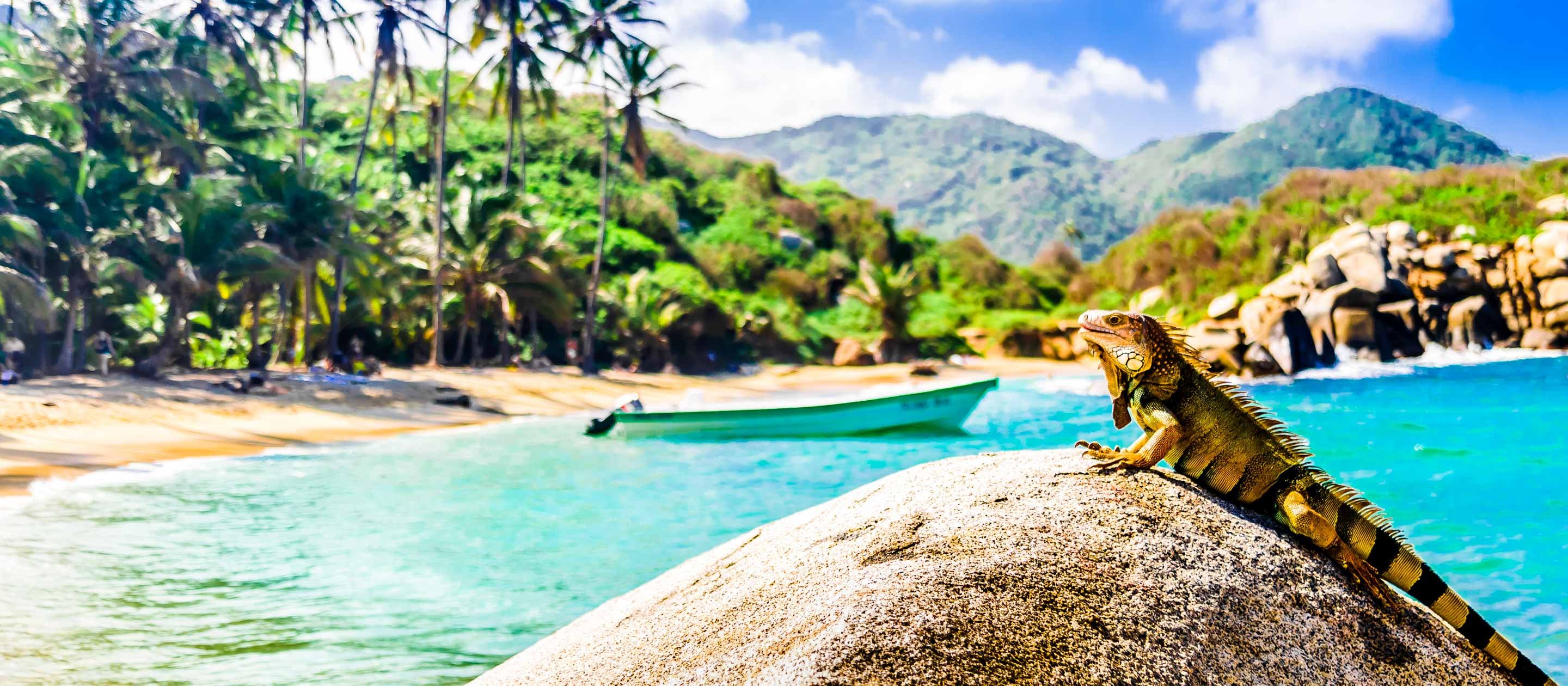 Lizard on beach rock in Tayrona National Park, Colombia