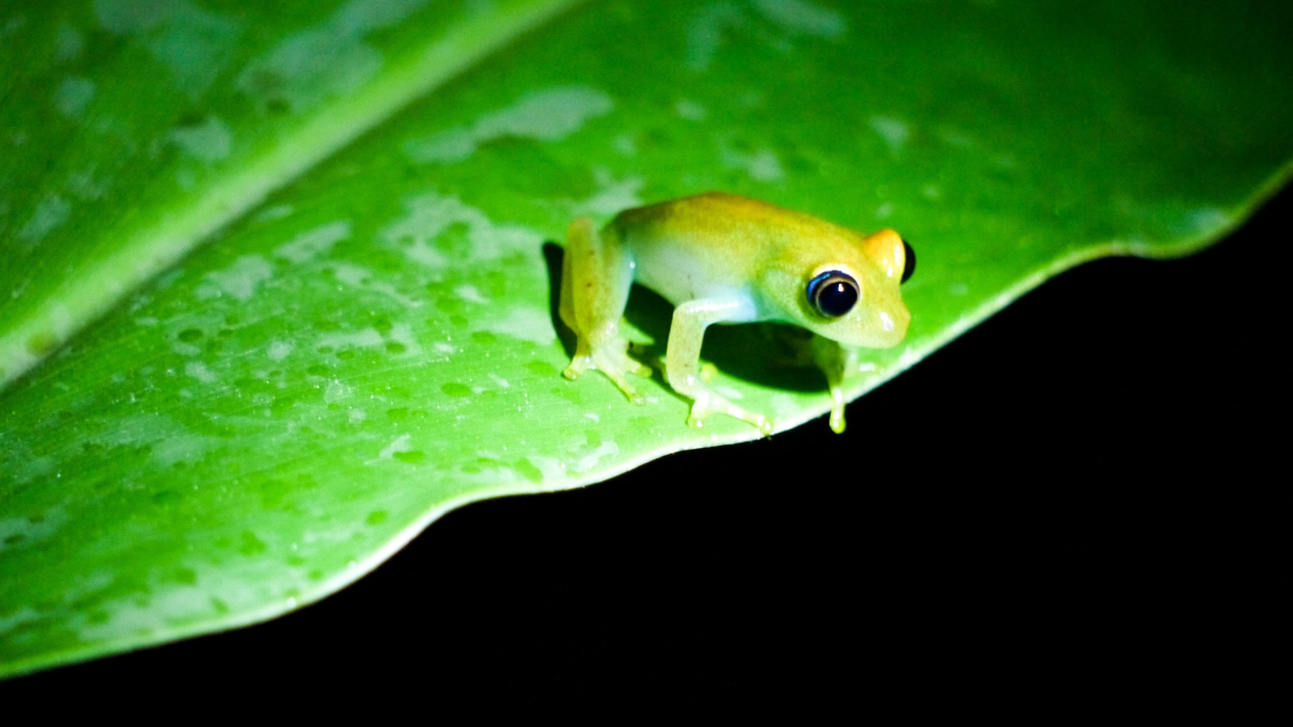 Frog sits on leaf in Madagascar