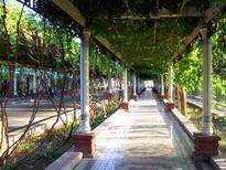 Turpan street shaded by trellised grapevines