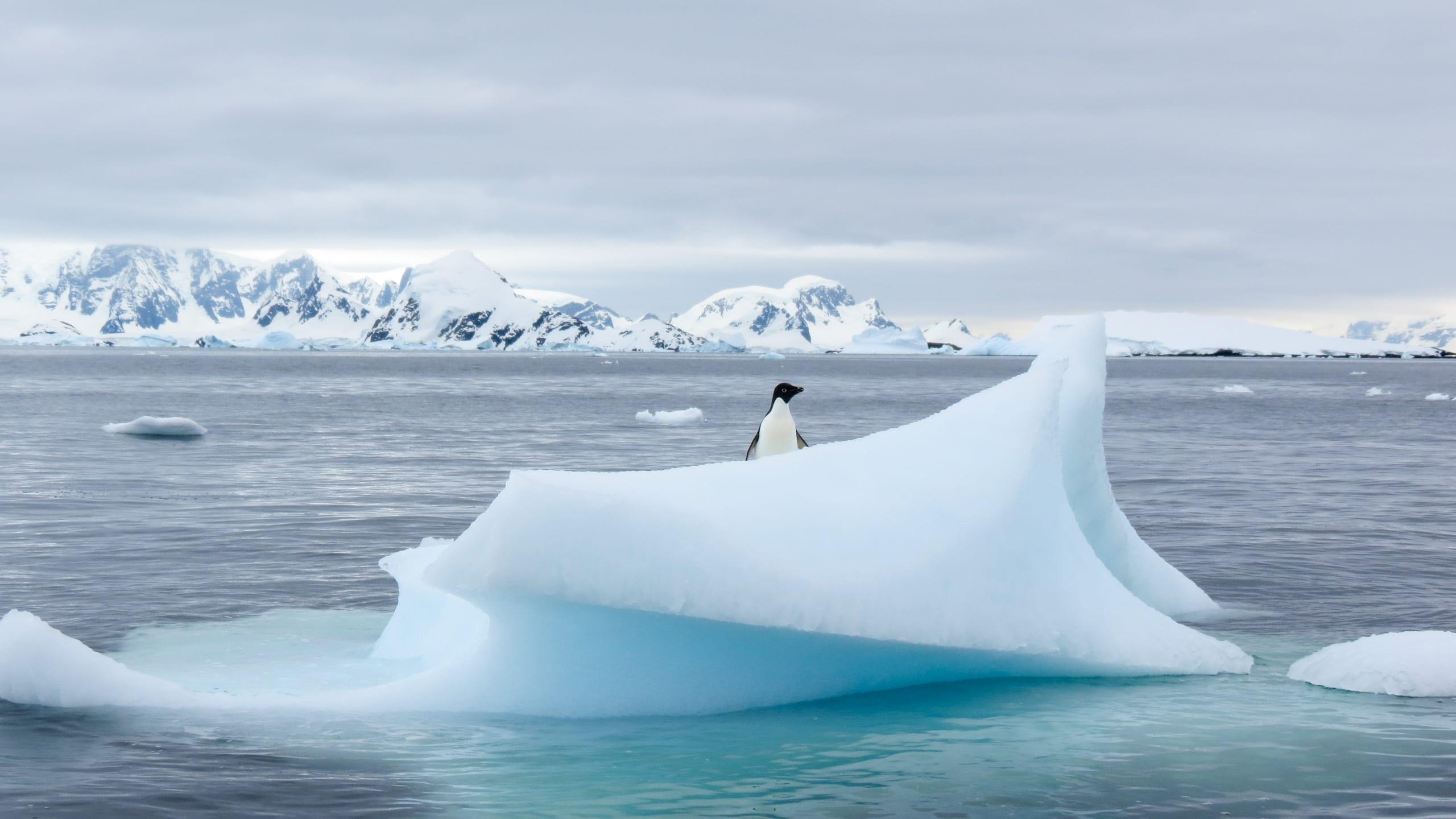 Penguin looks from iceberg
