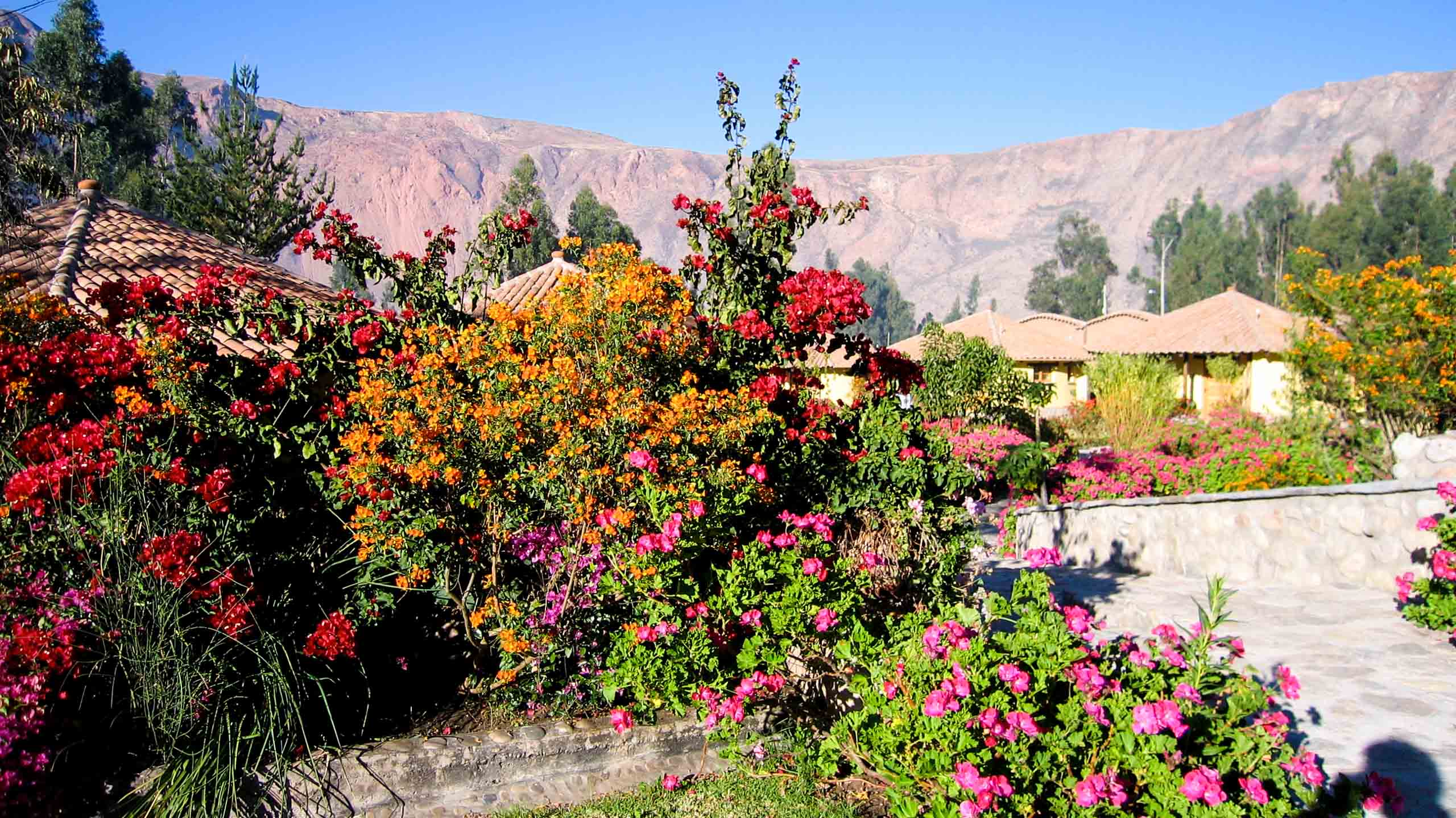 Flowers near mountain lodges in Peru