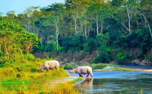 Rhinoceros walk through water in Chitwan National Park, Nepal