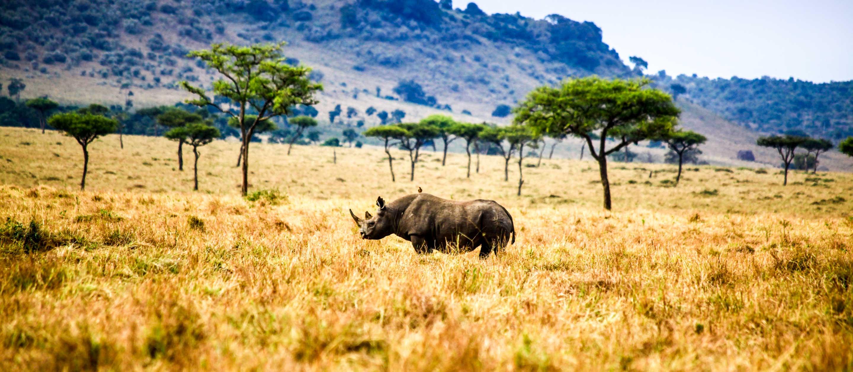 Rhinoceros standing on the Maasai Mara in Kenya