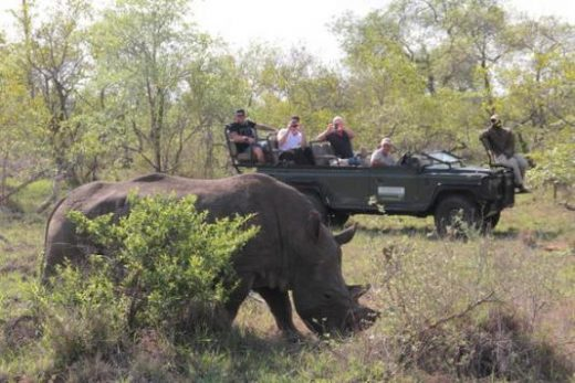 Enjoy your final safari of the trip