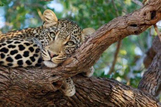 Keep your camera ready while on safari
