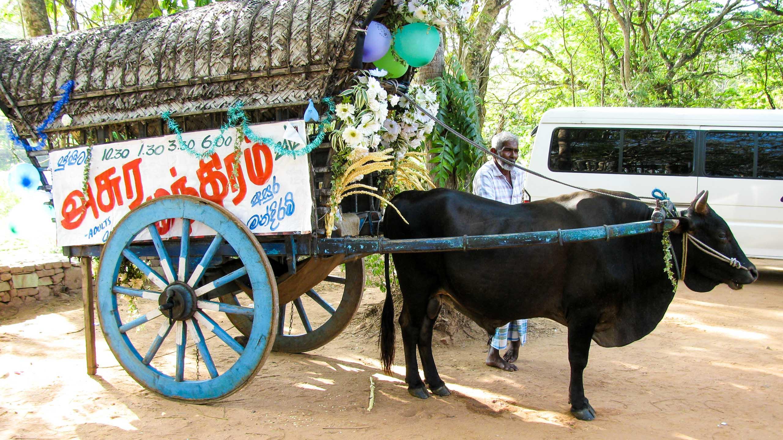 Cow pulling cart in Sri Lanka