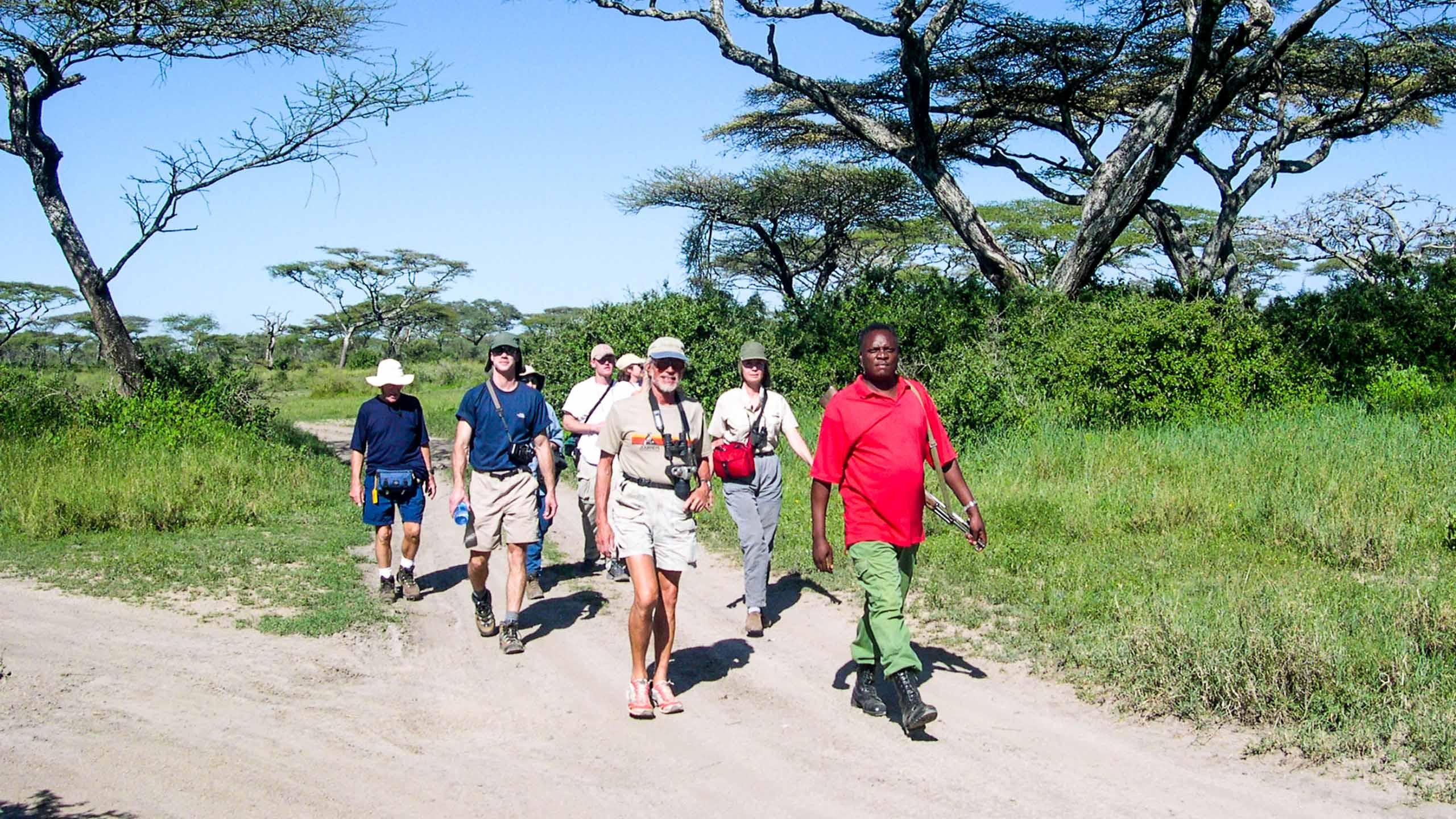 Safari groups walks along Tanzania road