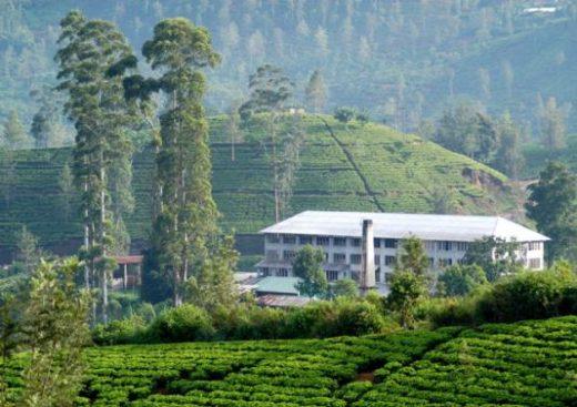Visit a working tea estate
