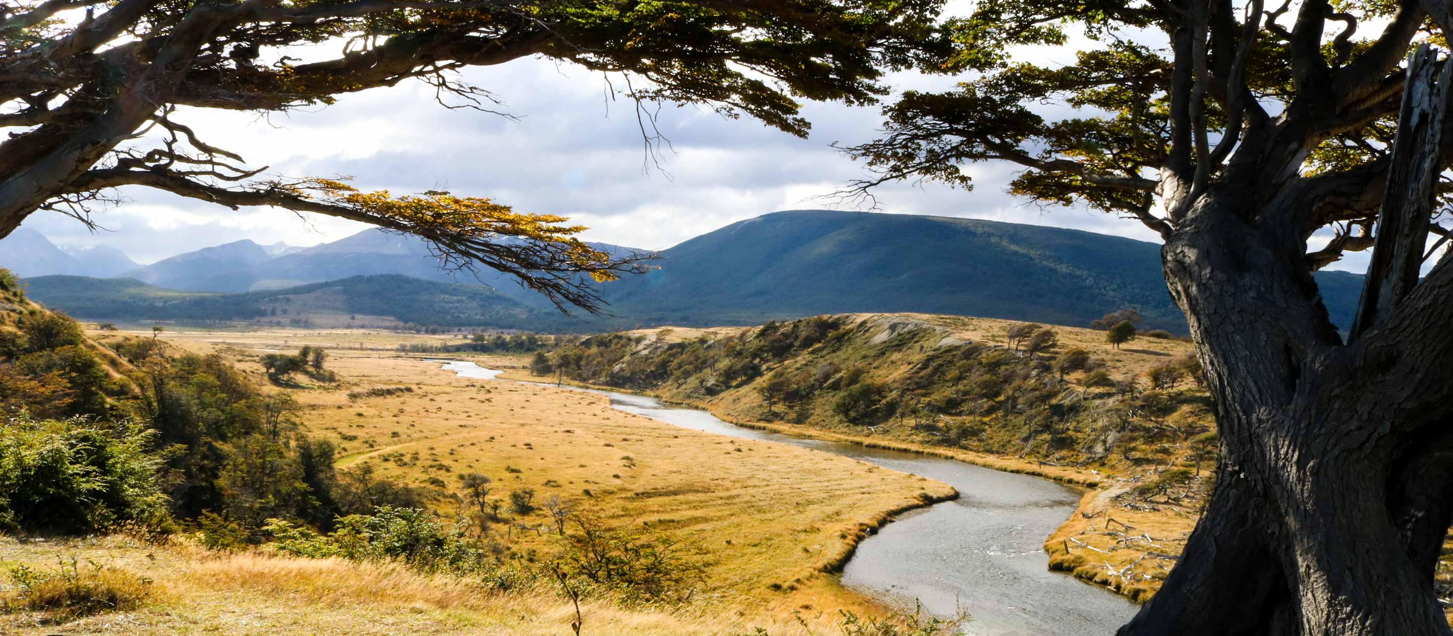 View past trees of Tierra del Fuego in Ushaia, Argentina