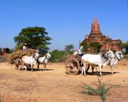 Local farmers in Bagan