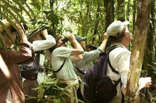 Spot unusual creatures in the Amazon jungle