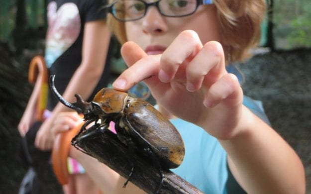 A boy petting a beetle