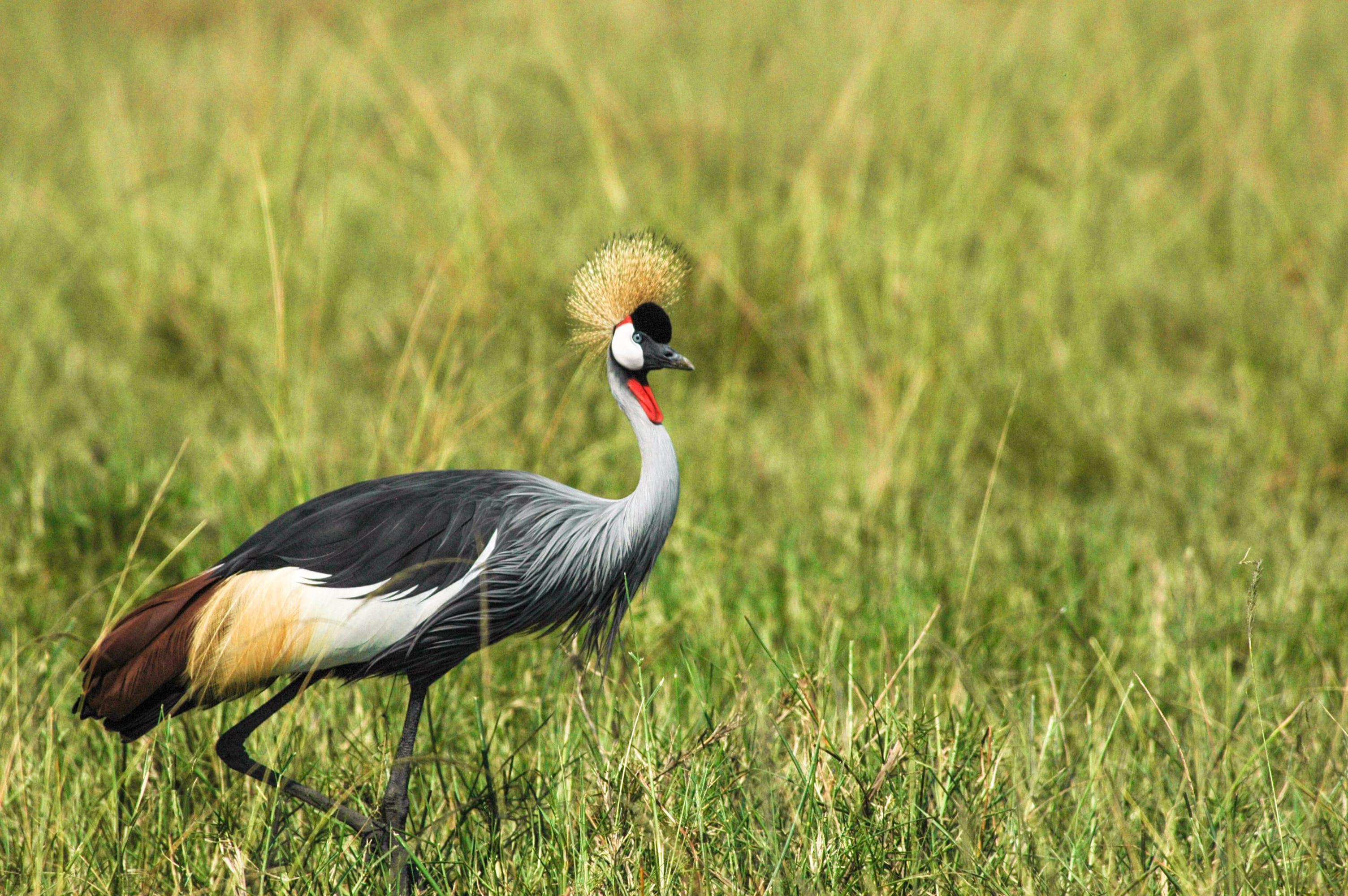 bird seen in Uganda