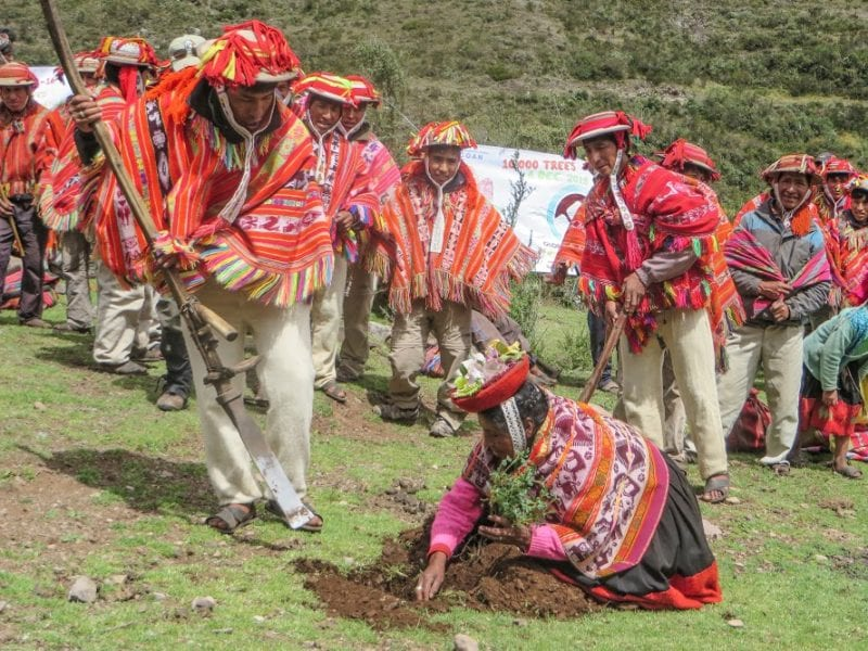 A man and women in traditional clothing plant a tree