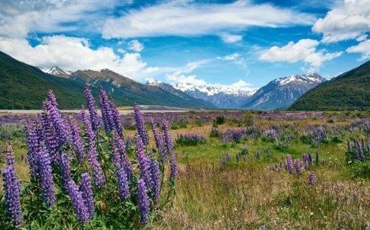 Visit the beautiful Arthur's Pass region today