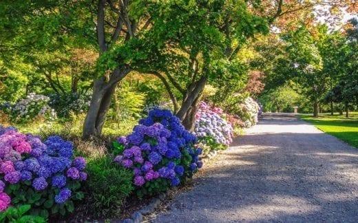 Beautiful Christchurch gardens