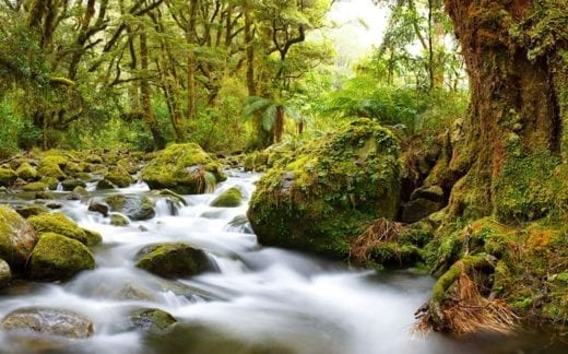 See the magical rainforest