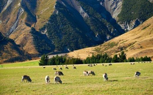 Tour a high country sheep farm