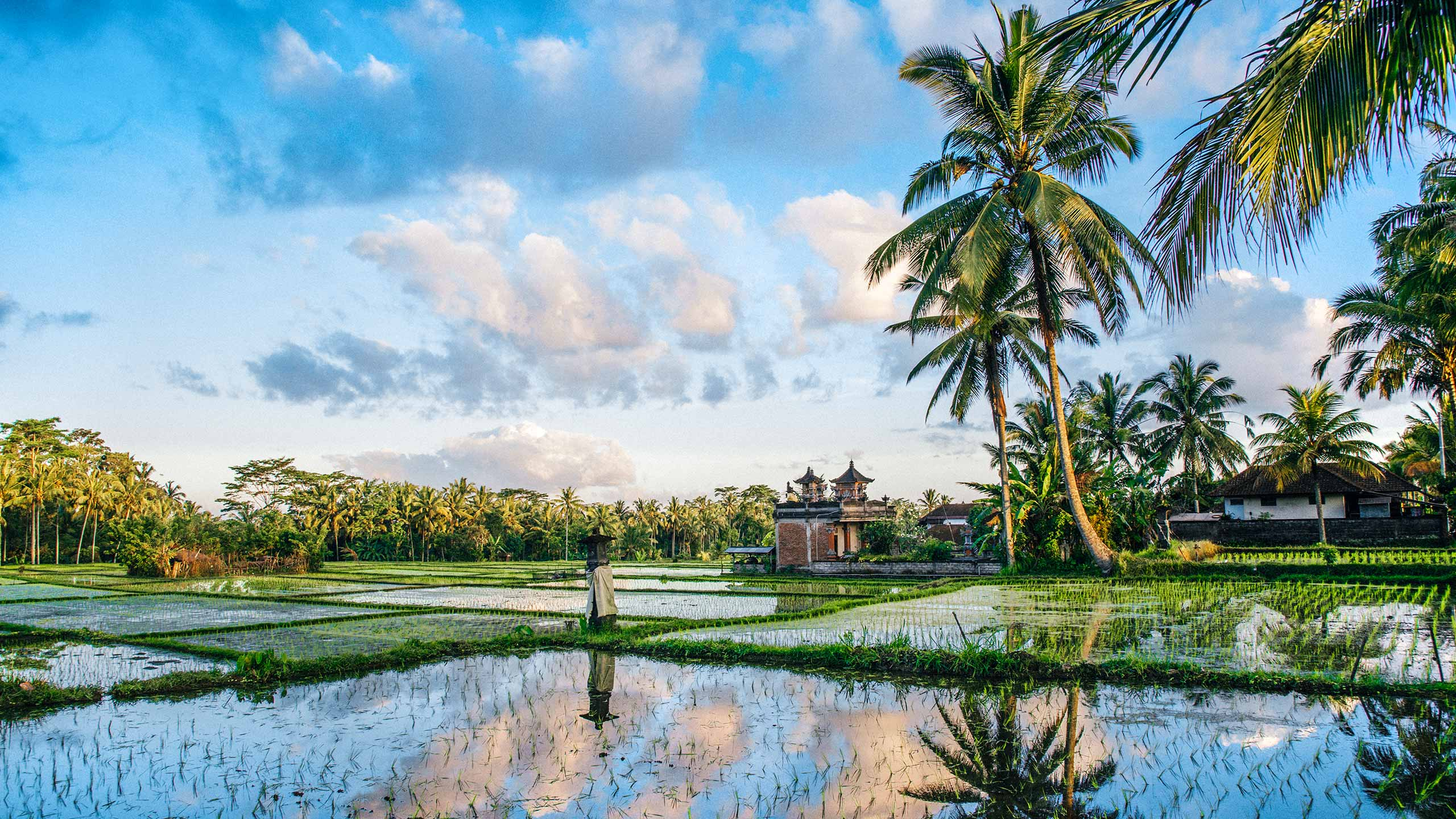 Ricefield view of Bali in Indonesia
