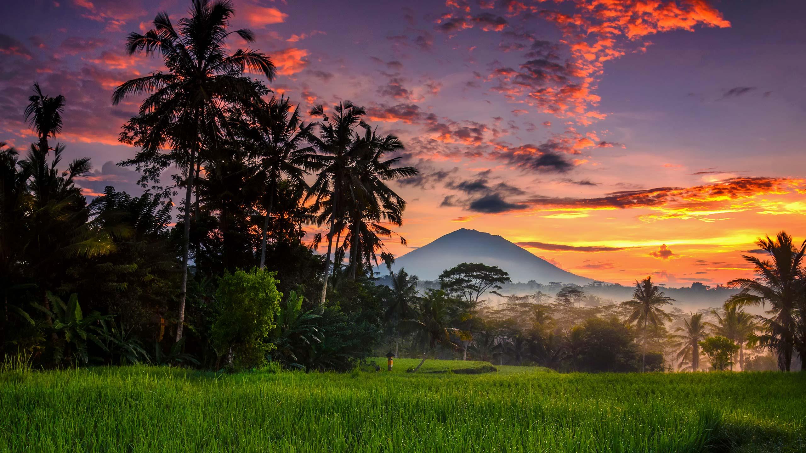 Morning at Ubud