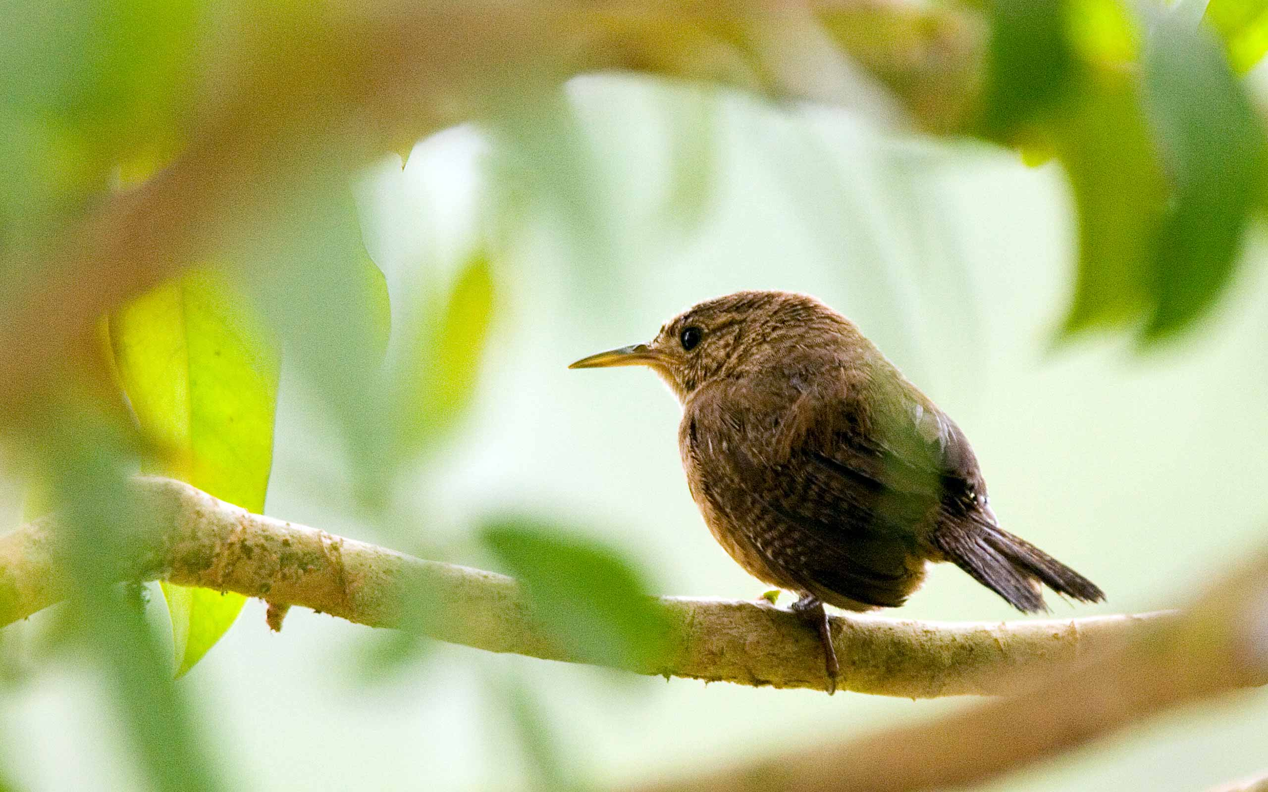 Small bird on a branch in Costa Rica